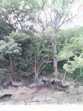 b0060945_15355633.jpg