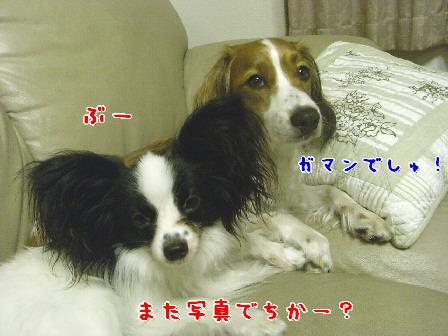 d0013149_213725.jpg