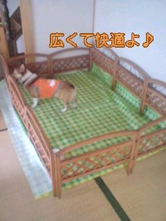 d0041956_20111025.jpg