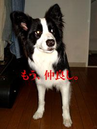 f0132070_2312547.jpg