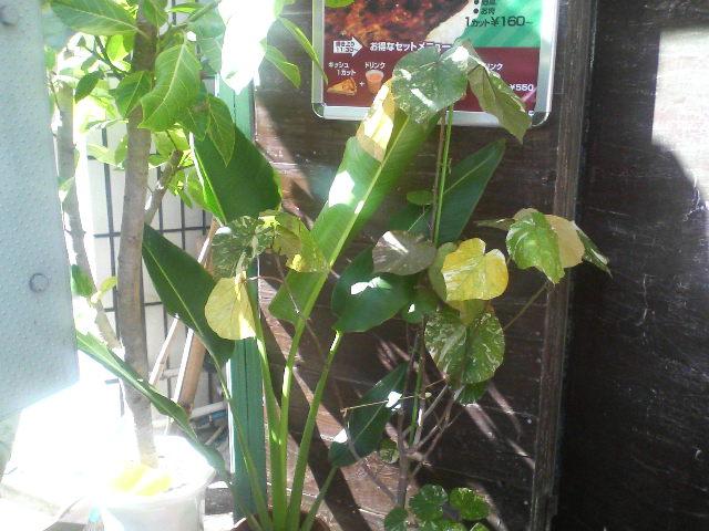 植物_a0075684_21102268.jpg