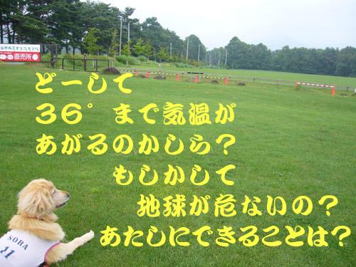 c0085188_20205767.jpg