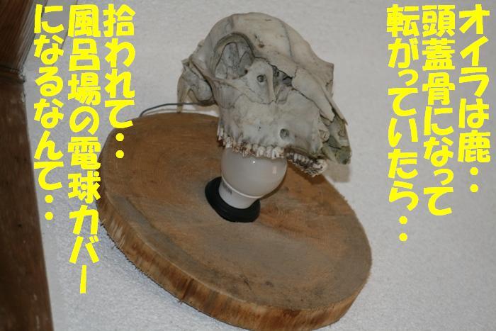d0077740_20115433.jpg