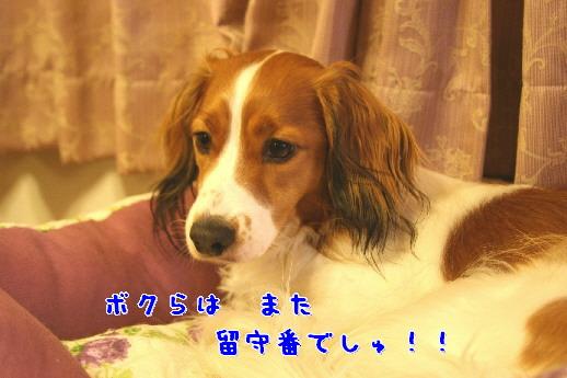d0013149_136867.jpg