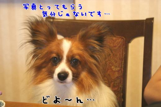 d0013149_29578.jpg