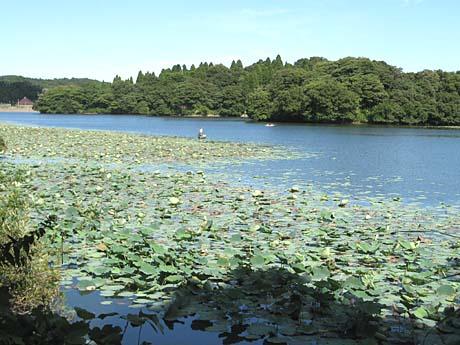 雄蛇ヶ池(おじゃがいけ)_b0114798_1854795.jpg