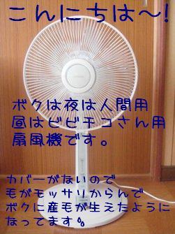 b0081503_12594479.jpg