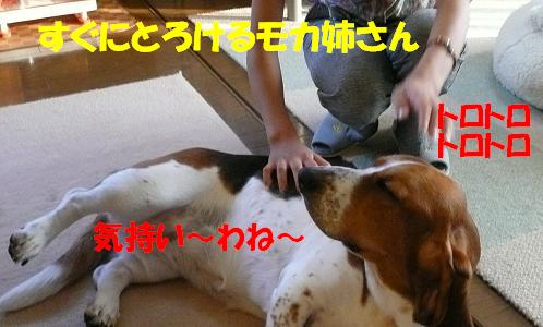 f0121712_1626415.jpg