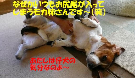 f0121712_16265743.jpg