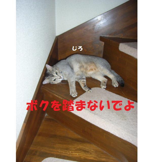 d0081025_19255620.jpg
