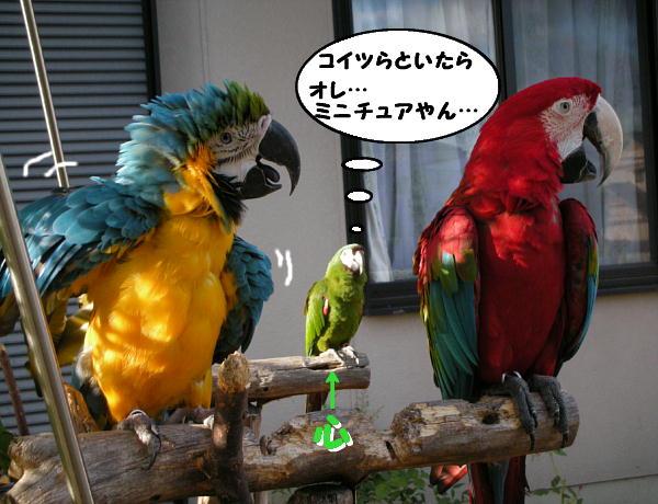 f0132055_0591332.jpg