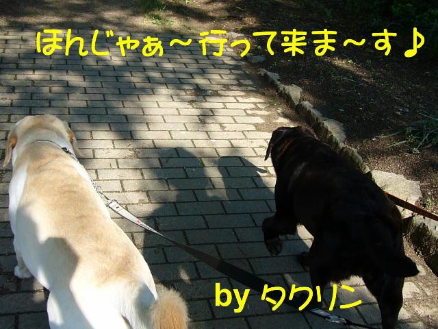 f0057565_1342858.jpg