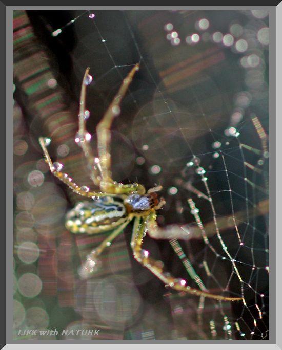 蜘蛛_b0093088_738782.jpg