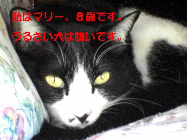 a0100721_1972598.jpg