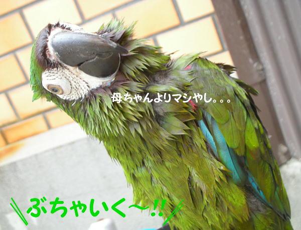 f0132055_11544291.jpg