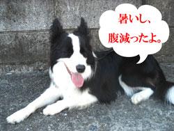 f0132070_8591973.jpg