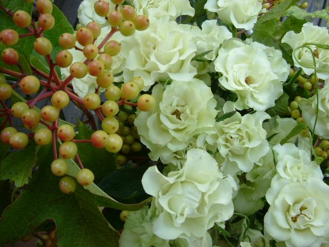 オークリーフ(バラ・緑光の花束)_f0049672_14433171.jpg