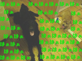 d0043478_022538.jpg