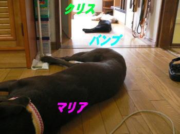 d0013645_18425157.jpg