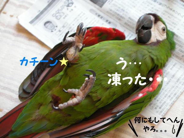 f0132055_11155996.jpg