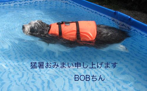 b0050356_179743.jpg
