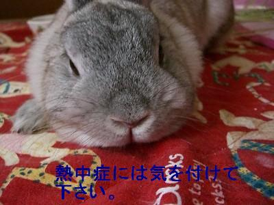 f0104057_2010058.jpg