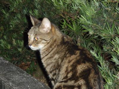 ネコと釣果_a0077071_16141811.jpg