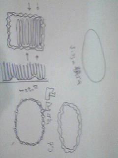 「輪ゴム」を考え直す_b0033172_2031331.jpg