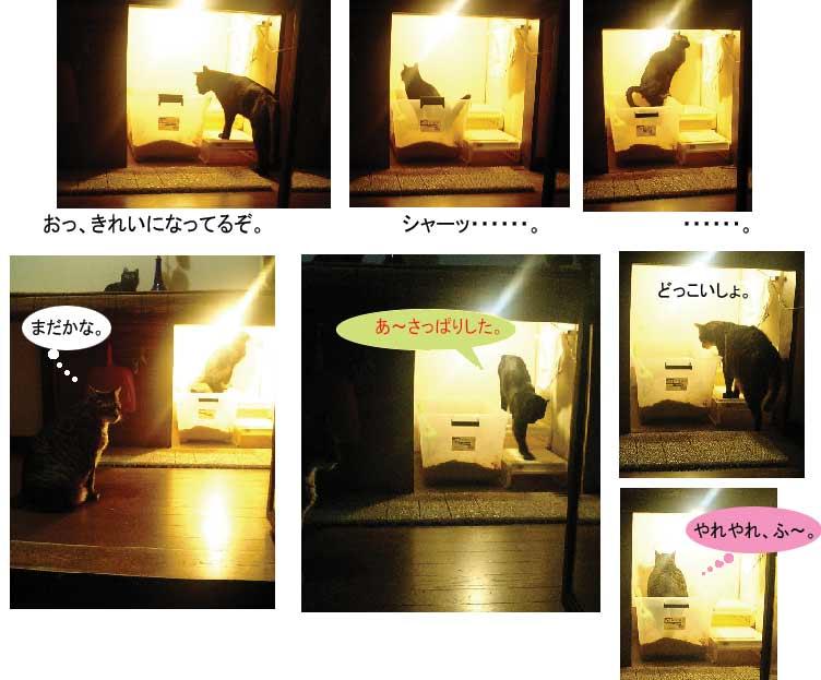 猫トイレ_b0019674_143458.jpg