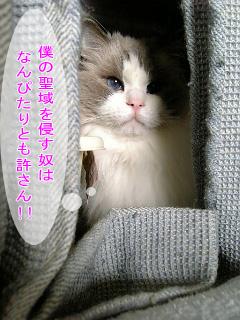 b0117783_13453011.jpg