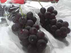 葡萄の収穫始め。_f0018099_20215130.jpg