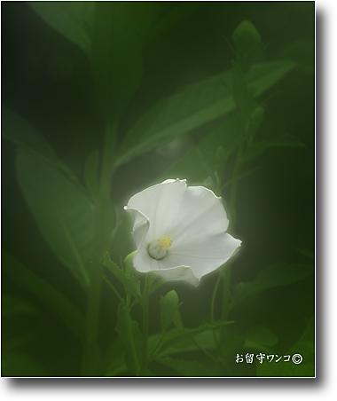 f0111147_10274655.jpg