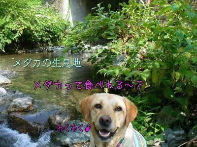 f0043658_0194642.jpg