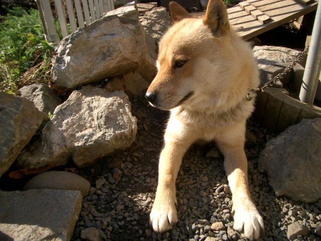 犬の表情_e0100772_2325053.jpg