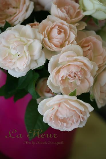 Roses_f0127281_2237391.jpg