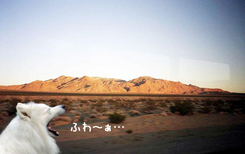 旅するクローカ その46_c0062832_165727.jpg