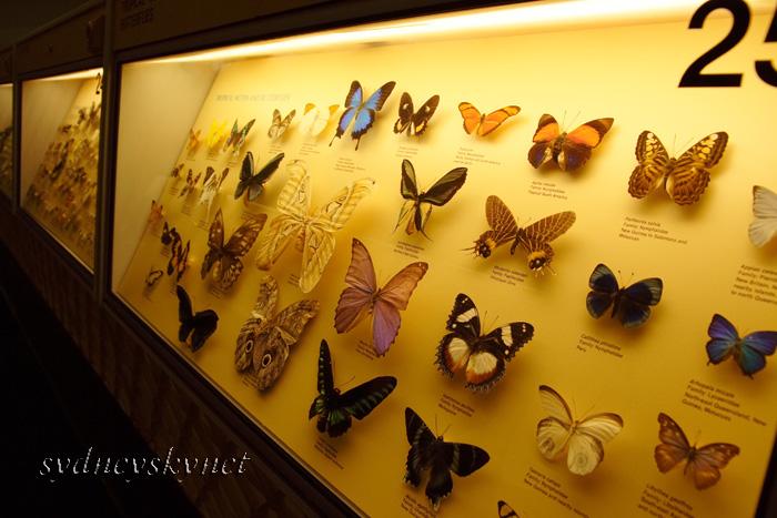 Australian Museum_f0084337_20334486.jpg