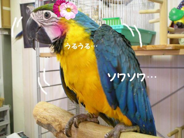 f0132055_227163.jpg