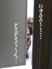 f0091785_129331.jpg