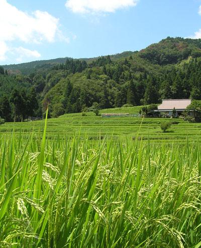 畑の棚田_e0048413_22172156.jpg