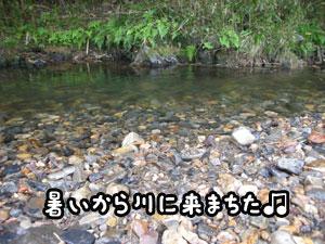 f0129214_1325252.jpg