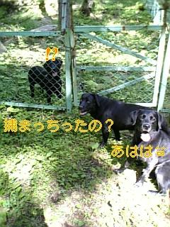 f0148927_1849548.jpg