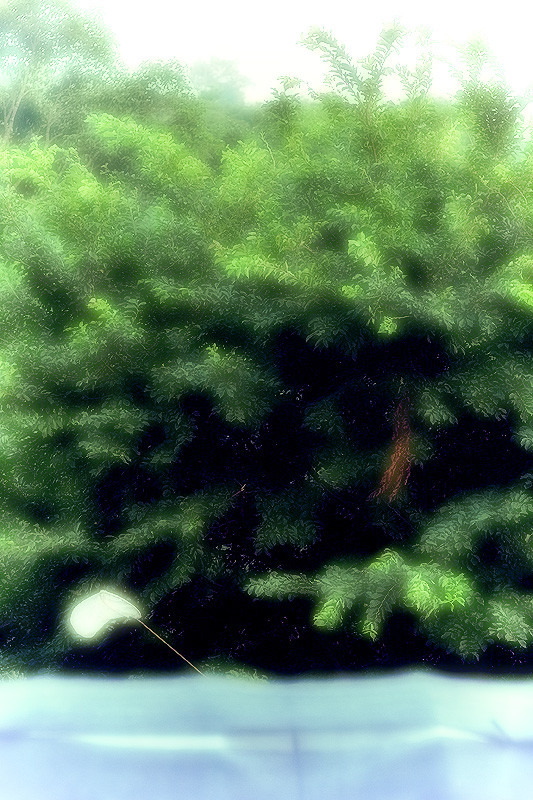 d0004832_10152380.jpg