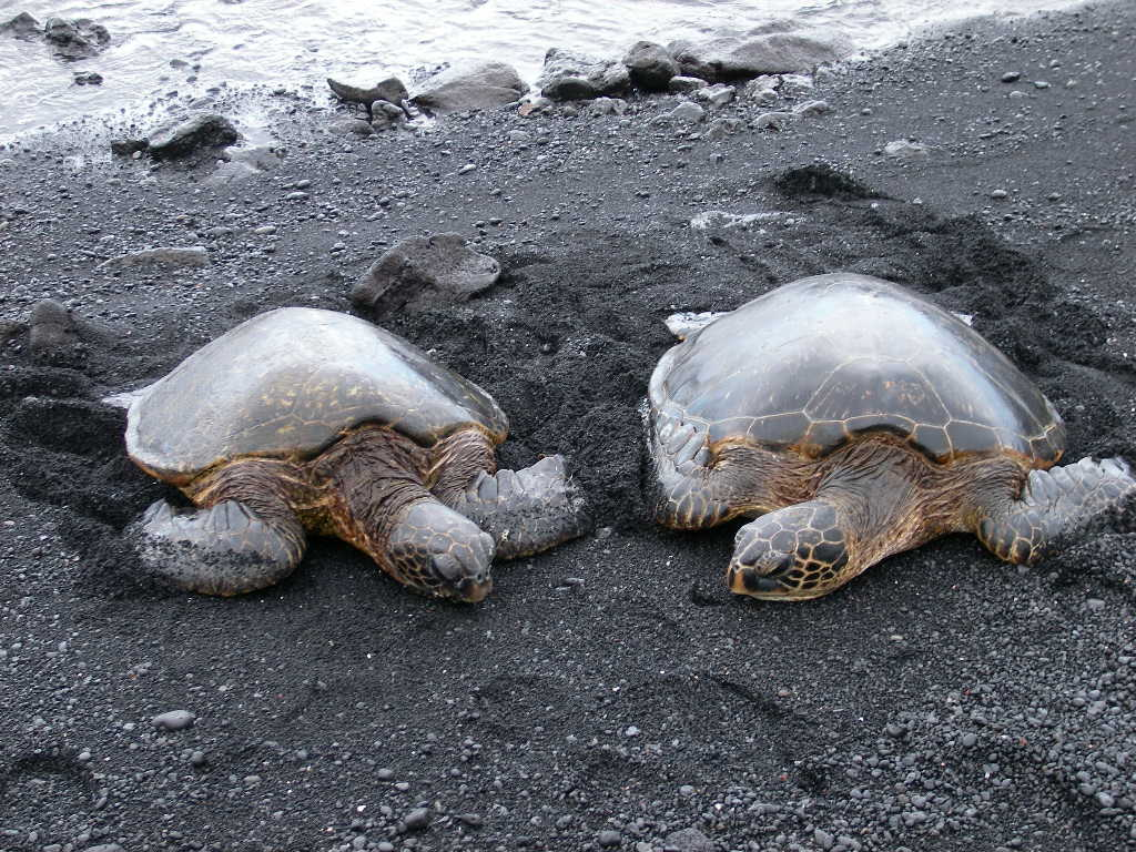 ハワイから_c0099133_025425.jpg