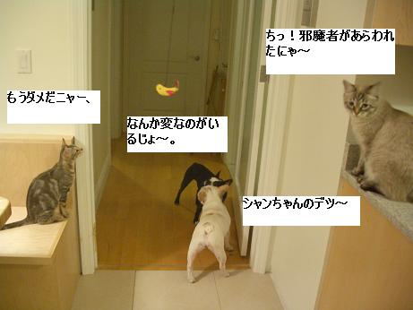 c0132537_12365444.jpg