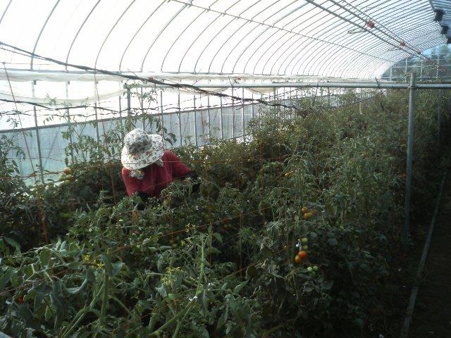 中央道パーキングエリアで四季菜のトマト販売_c0110298_21213841.jpg