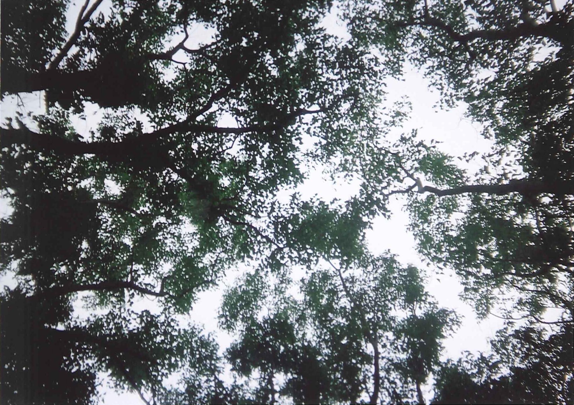 中学生夏休み写真コンクール 自然・風景部門 [皆さんの投票をお待ちしています!]_d0116009_312866.jpg