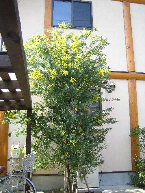 2007 LOG春の風景 3_c0038619_1518457.jpg