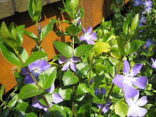 2007 LOG春の風景 2_c0038619_15211273.jpg