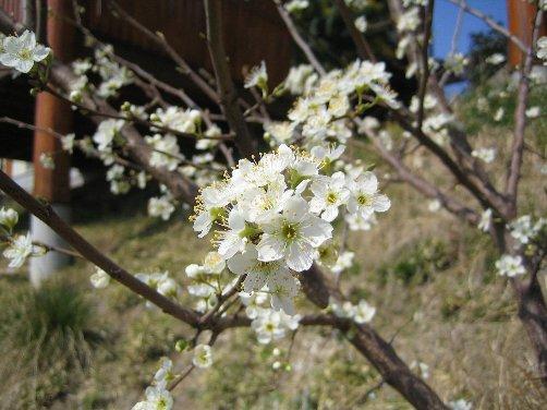 2007 LOG春の風景 1_c0038619_15241514.jpg